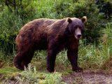 """Преди пълнолуние: Броиха мечките в районите на Мостово, Лилково и ДЛС """"Чепино"""""""