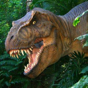 Тиранозаврите вероятно са били социални хищници и са ловували на групи