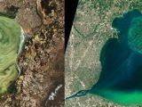 Токсичен цъфтеж на водорасли застрашава сладководните езера по цялата планета